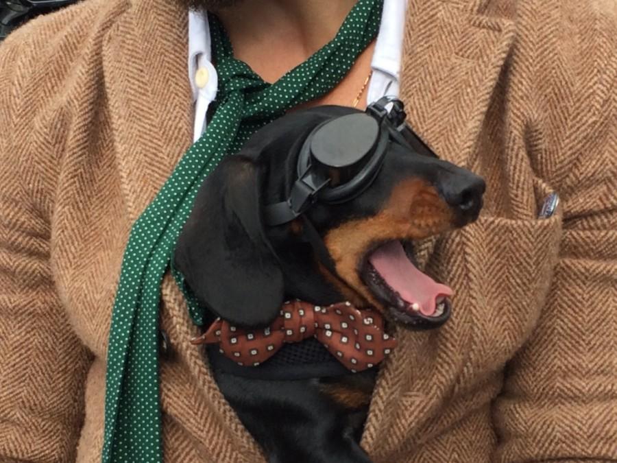 Distinguished Gentlemans Ride 2015 Dapper Dog
